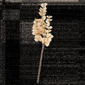 Bilde av EUCALYPTUS H:88 cm